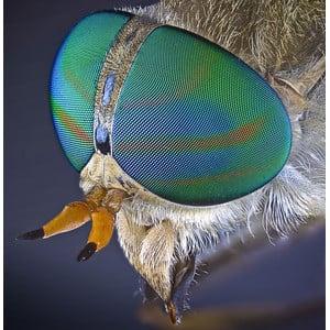 Lumenera INFINITY2-2C, CCD, color, 2.0 MP