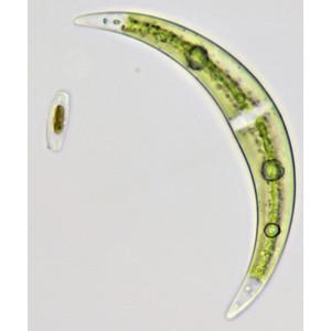 Bresser Microscopio Science TRM 301, trino, 40x - 1000x