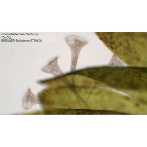 Bresser Microscopio Bioscience, trino, 40x - 1000x