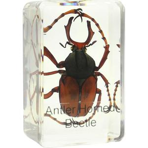 Omegon stag beetle prepared slide