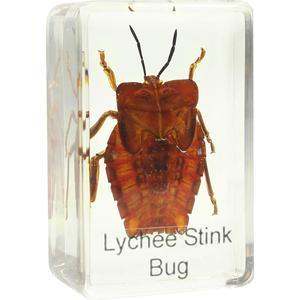 Omegon shield bug prepared slide