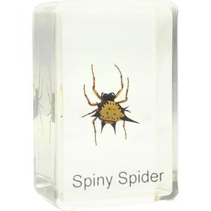 Omegon Preparado para microscopio: Araña soldado