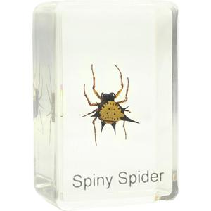 Omegon spiny spider prepared slide