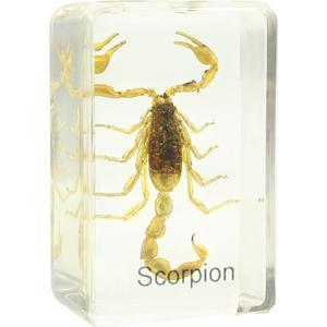 Omegon lâmina de mostra com escorpião