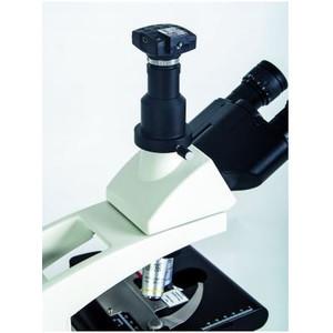 Hund Mikroskop Medicus PH Plan, trino, 100x-1000x