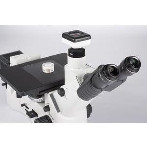 Motic Microscopio AE2000 MET, trino, LM, 50-500x, 100W