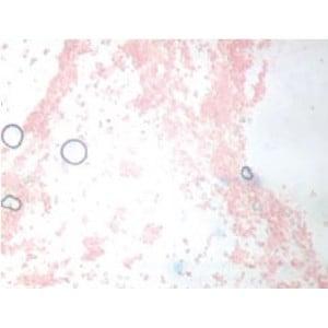 Novex Microscopio 86.091-DFLED, trinoculare
