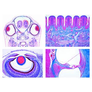 LIEDER Ensemble N°III Physiologie sensorielle (16 préparations) pour les écoles secondaires