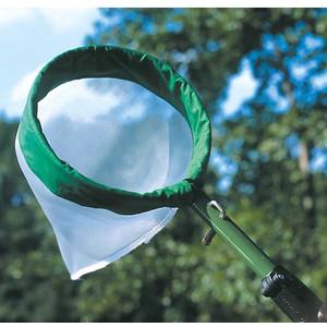 Windaus Retina per insetti