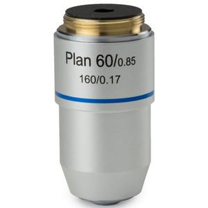 Euromex Obiettivo S100x/1,25 plan, a molla, immersione a olio, DIN, BB.8800 (BioBlue.lab)