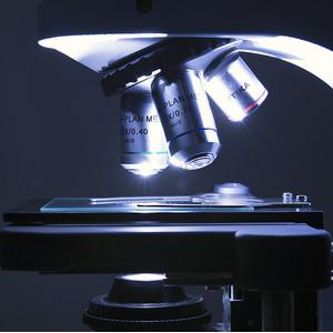 Optika Microscopio B-510BF, campo chiaro, trino, 1000x, IOS