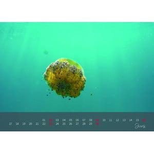 aracanga Kalender 2019