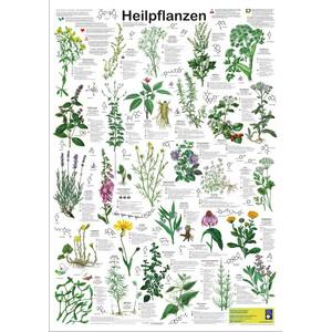 Planet Poster Editions Poster Heilpflanzen