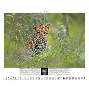 Palazzi Verlag Kalender Planet Erde 2020