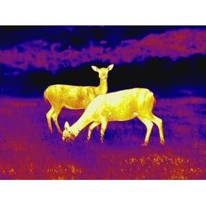 Leica Camera termica Calonox Thermal Wärmebildkamera