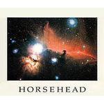 Palazzi Verlag Poster Horse head fog