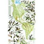 National Geographic Landkarte Karte der Zugvögelwanderung