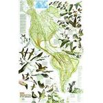 National Geographic Mapa wędrówek ptaków
