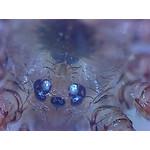 Ojos de una araña.