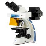 Euromex Microscopio OX.3085, trinoculare, Fluarex, olio