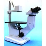 Hund Microscopio Wilovert Standard HF 40, bino, 100x-400x