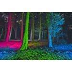 Die QUATTRO COLOR - Multicolor Power LED strahlt für Sie in den Farben Weiß, Rot, Grün und Blau.