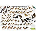 Planet Poster Editions Poster Einheimische Gartenvögel