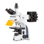 Euromex Microscope iScope, IS.3153-PLi/6, trino