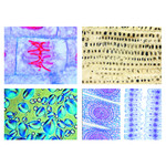 LIEDER The Plant Cell, 12 microscope slides