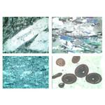LIEDER Dun gesteenteslijpsel serie V, sedimentgesteenten (sedimenten) (22 preparaten)