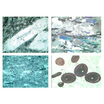 LIEDER Gesteinsdünnschliffe Serie V Sedimentgesteine (Sedimentite)  (22 Präp)