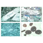 LIEDER Rocks and Minerals, Ground Thin, Fossils and Meteorites, Set no. VI,  4 Microscope Slides size 30x45 mm, without box