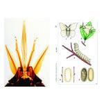 LIEDER Insects, Basic Set of 6 slides, Student Set
