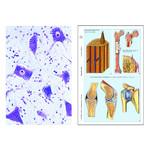 LIEDER The Animal Cell (Cytology), Basic Set of 6 slides, Student Set