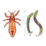 LIEDER Parasites, complément (12 préparations), kit étudiant