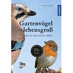 Kosmos Verlag Gartenvögel lebensgroß