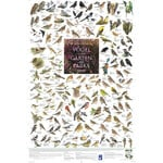 Planet Poster Editions Poster Vögel in den Gärten und Parks Europas