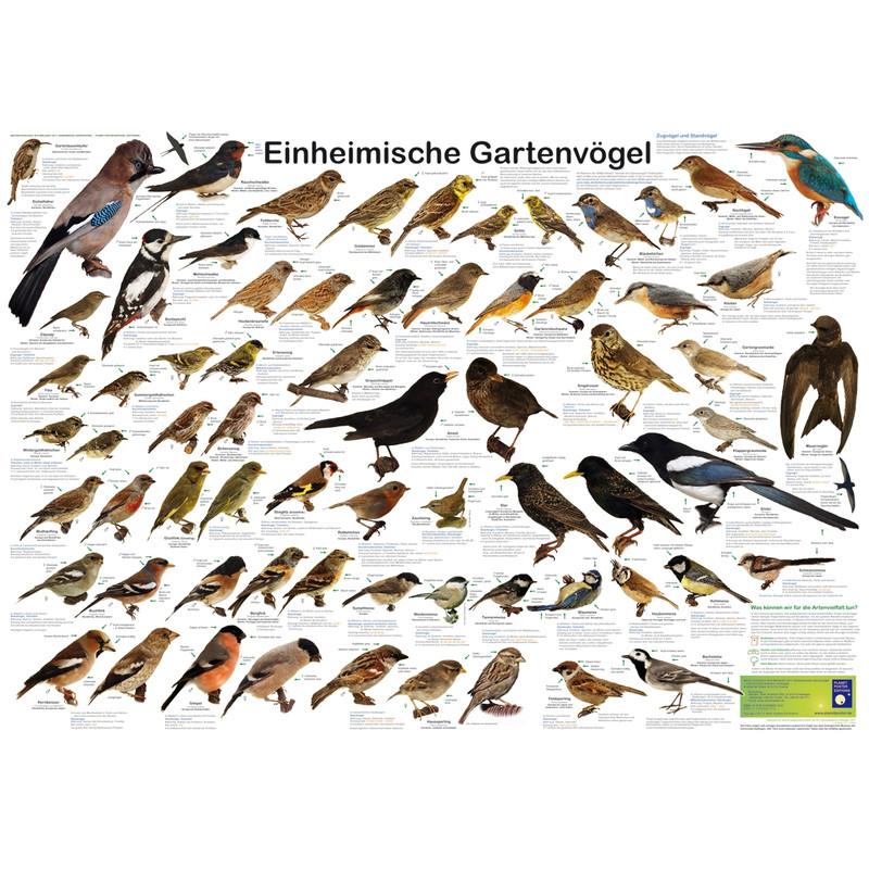 Planet Poster Editions Poster Einheimische Gartenvogel