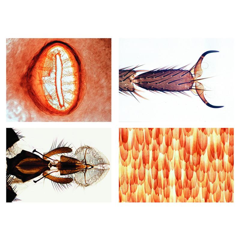 lieder insekten grundserie 25 pr p. Black Bedroom Furniture Sets. Home Design Ideas